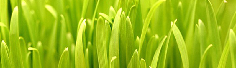 blog_GrassGreenest